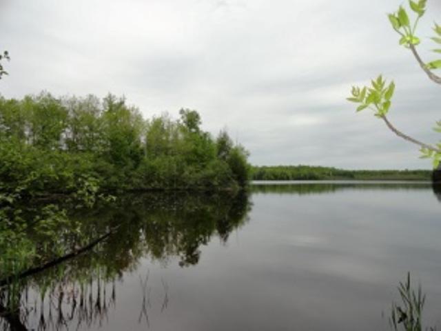 Bear Lake Road, Wabeno, WI 54566 (#50189919) :: Dallaire Realty