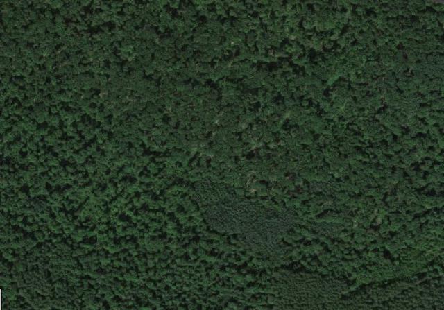 Dodge Farm Road, Gresham, WI 54128 (#50199226) :: Symes Realty, LLC