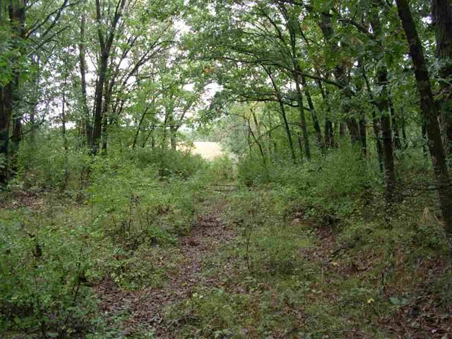 Blackhawk Road, Wild Rose, WI 54984 (#50211969) :: Symes Realty, LLC