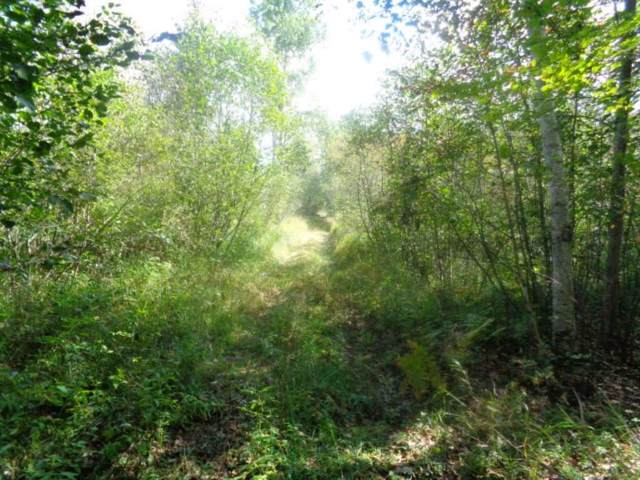 Kosmal Lane, Lena, WI 54139 (#50212188) :: Symes Realty, LLC