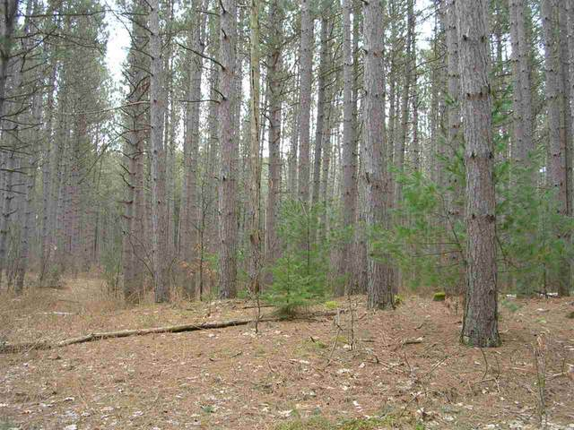 W9141 Alpine Trail, Wild Rose, WI 54984 (#50220014) :: Todd Wiese Homeselling System, Inc.