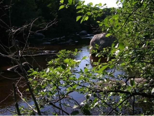 Rivers Meet Lane, Silver Cliff, WI 54104 (#50225195) :: Carolyn Stark Real Estate Team