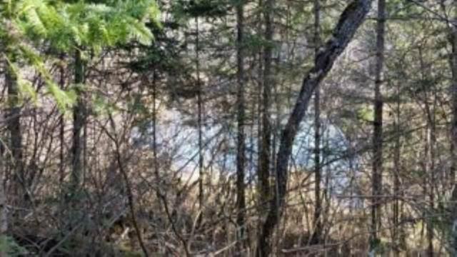 River Ridge Road, Wabeno, WI 54566 (#50233879) :: Todd Wiese Homeselling System, Inc.