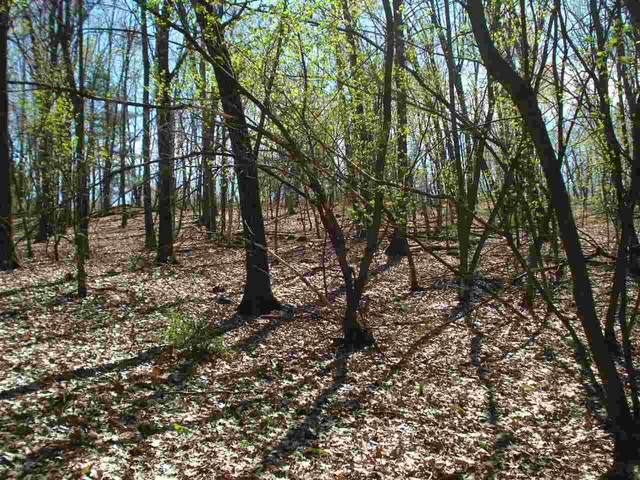 Bighorn Avenue, Wautoma, WI 54982 (#50239413) :: Dallaire Realty