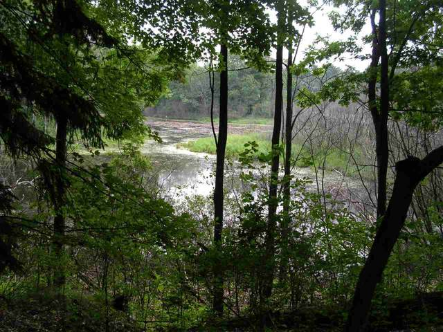 Hiwela Drive, Wild Rose, WI 54984 (#50245015) :: Dallaire Realty