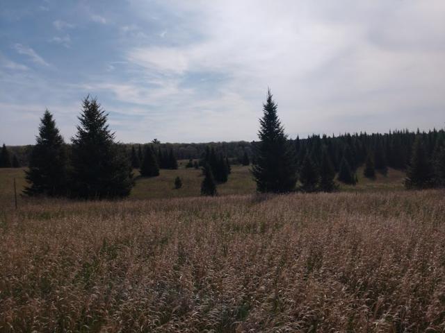Bighorn Drive, Wautoma, WI 54982 (#50178991) :: Symes Realty, LLC