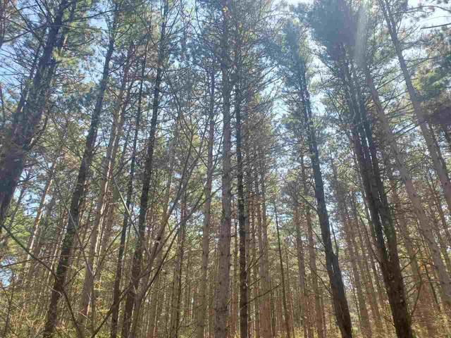 Deer Path Trail, Hancock, WI 54943 (#50236183) :: Symes Realty, LLC