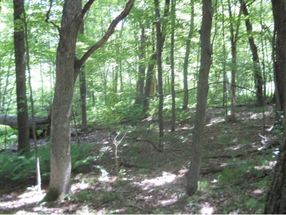 W Stratton Road, Waupaca, WI 54981 (#50146417) :: Dallaire Realty