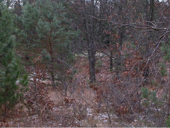 Bow String Drive #20, Hancock, WI 54943 (#50154707) :: Dallaire Realty