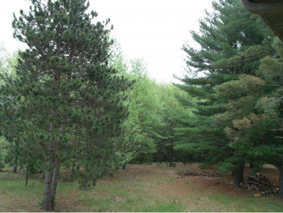 Ona Pines Road, Weyauwega, WI 54983 (#50168807) :: Symes Realty, LLC