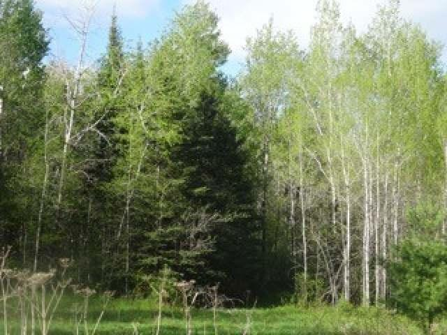 Brown Lane, Mountain, WI 54149 (#50185790) :: Dallaire Realty