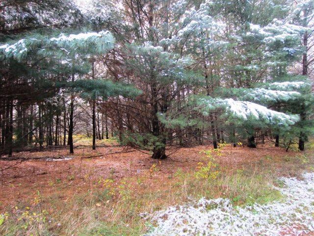 Linda Lane, Mountain, WI 54149 (#50193258) :: Symes Realty, LLC