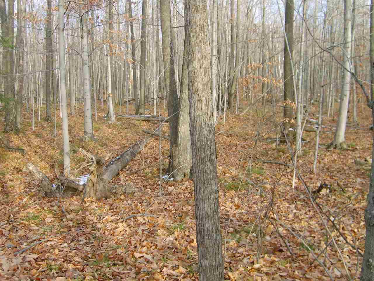 Birch Lane - Photo 1