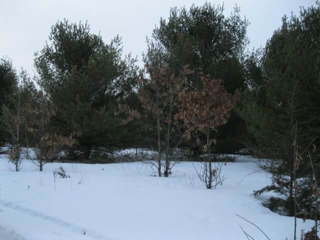 19TH Avenue, Wautoma, WI 54982 (#50217732) :: Todd Wiese Homeselling System, Inc.