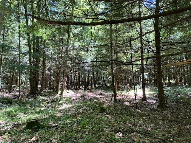 Pine Drive, White Lake, WI 54491 (#50225781) :: Ben Bartolazzi Real Estate Inc