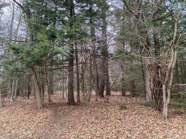 Lost Creek Lane, Green Bay, WI 54313 (#50239273) :: Ben Bartolazzi Real Estate Inc
