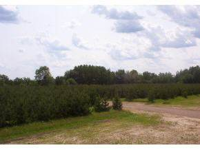 Wandering Springs Court, Mountain, WI 54149 (#50196962) :: Dallaire Realty