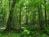 0 Lot 1 Whisper Trail - Photo 4