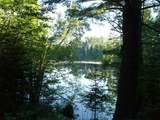 On Pixley Wilderness Shores Rd - Photo 1