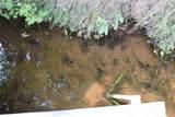 29116 Pardun Road - Photo 20