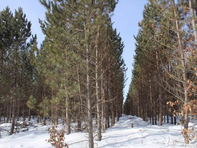 ON Ross  8223-2 Road, Trego, WI 54888 (MLS #1538146) :: The Hergenrother Realty Group