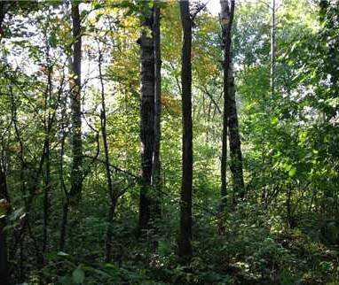 Lot 267th, Holcombe, WI 54745 (MLS #1547437) :: RE/MAX Affiliates