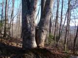 89 Adirondack Ln - Photo 1
