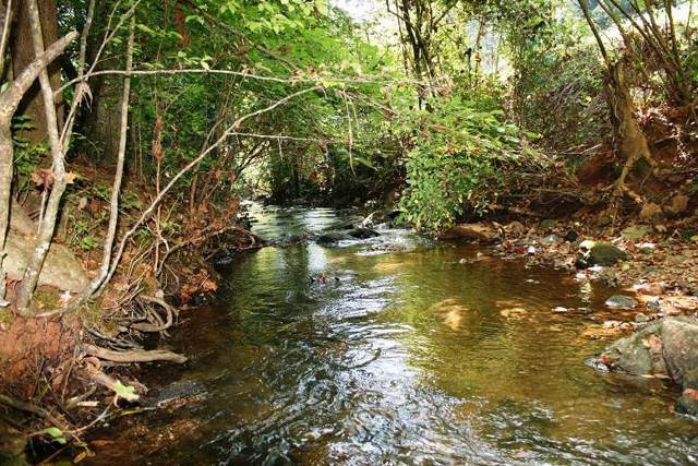 300 Camp Mccall Road, Bostic, NC 28018 (#47282) :: Robert Greene Real Estate, Inc.