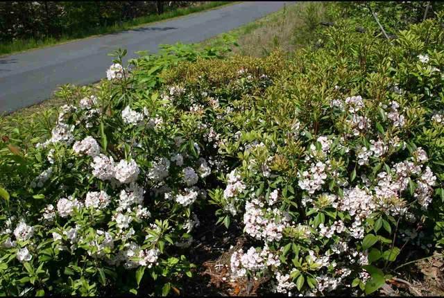 36 Inspiration Ridge, Bostic, NC 28018 (#48083) :: Robert Greene Real Estate, Inc.