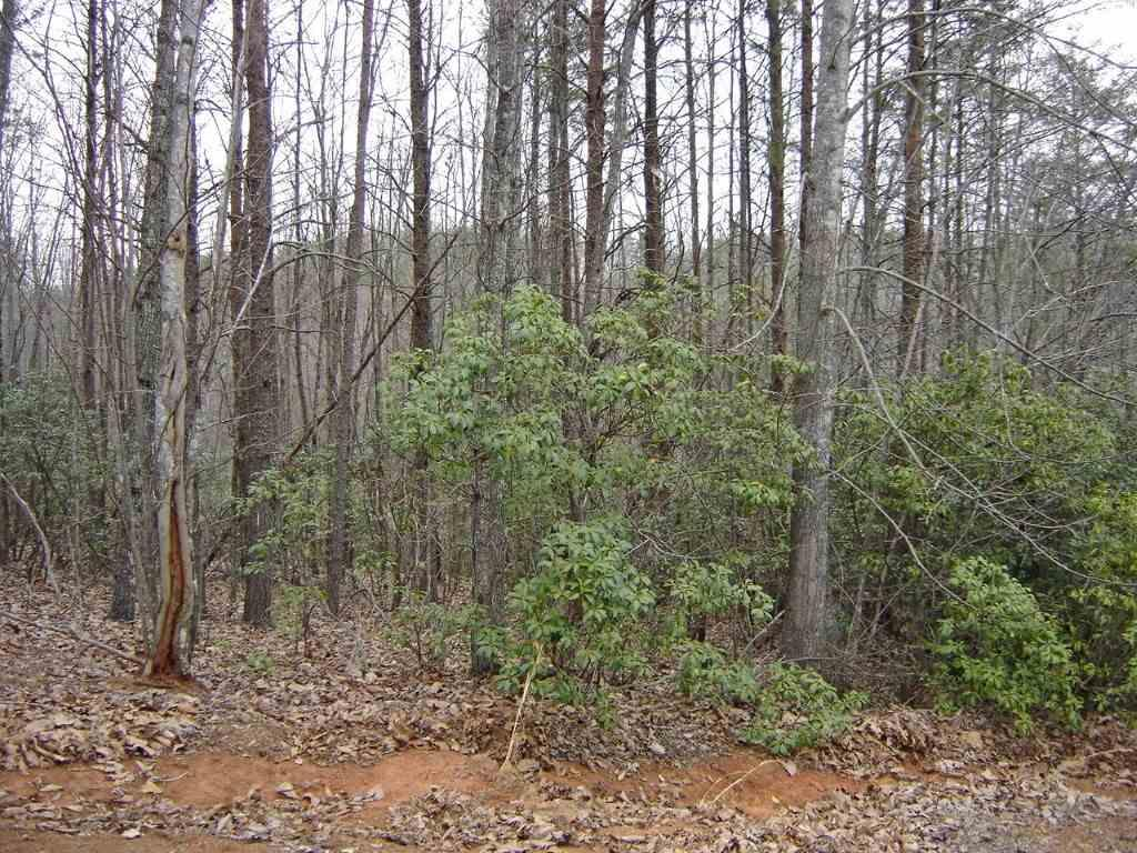 24 Grouse Ridge - Photo 1
