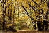 12660 Woodland Trl - Photo 36