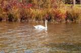 7960 Deer Lake Farms Rd - Photo 98