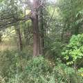 8045 Trail Ridge - Photo 11