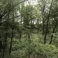 8045 Trail Ridge - Photo 5