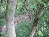 0 Birch Run Rd. - Photo 7