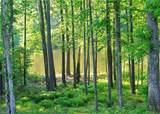 3081 Ponderosa Pine Ln - Photo 45