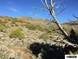 00 Quaking Aspen - Photo 14