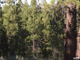 Hwy 89 83.75 Acres - Photo 19