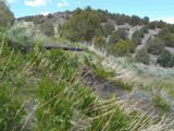4730 Lost Burro Road - Photo 4