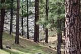 725 Kelly Canyon - Photo 7