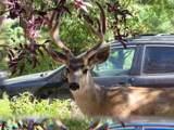 200 Black Pine Drive - Photo 12