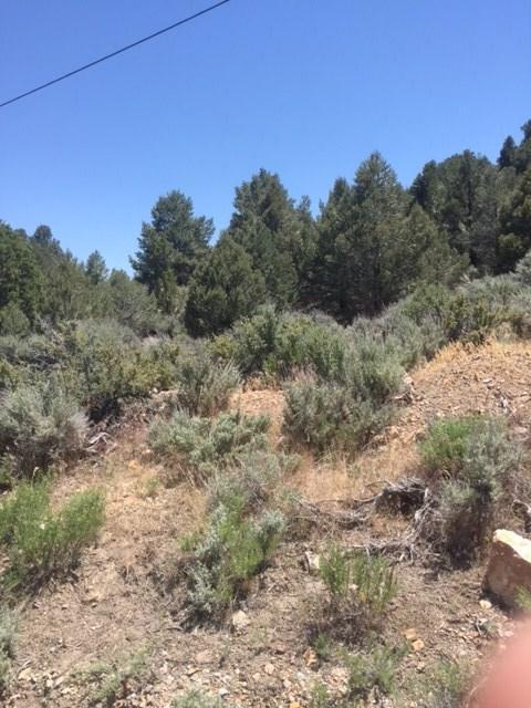 2555 Cartwright Rd, Reno, NV 89521 (MLS #190007068) :: Vaulet Group Real Estate