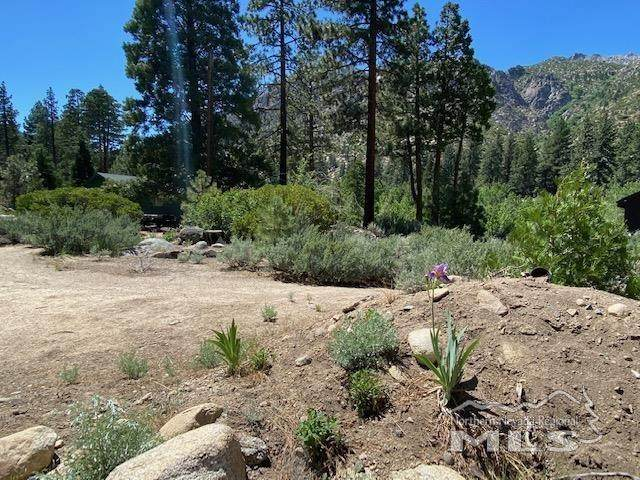 99 Woodfords Lane, Markleeville, Ca, CA 96120 (MLS #210007897) :: Theresa Nelson Real Estate
