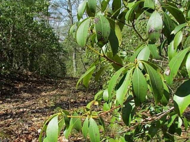 195 Kenyon Hill Trail, Richmond, RI 02898 (MLS #1245751) :: The Martone Group