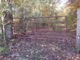 8.62 Acres Tammy Trail - Photo 6
