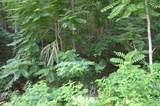TBD Overlook Trail/Dustin Ridge Road - Photo 2