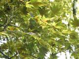 200 Bent Tree Drive Nw - Photo 29