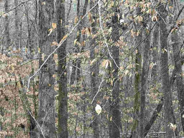 Lot 34 B Peck Lane, Decatur, TN 37322 (#20190446) :: Billy Houston Group