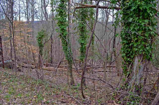 TBD Scenic Drive, Dayton, TN 37321 (MLS #20201236) :: The Mark Hite Team