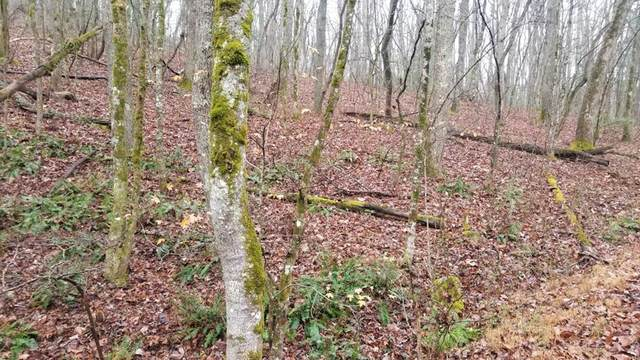 5.189 Acres Lucknow Lane, Spring City, TN 37381 (#20210295) :: Billy Houston Group